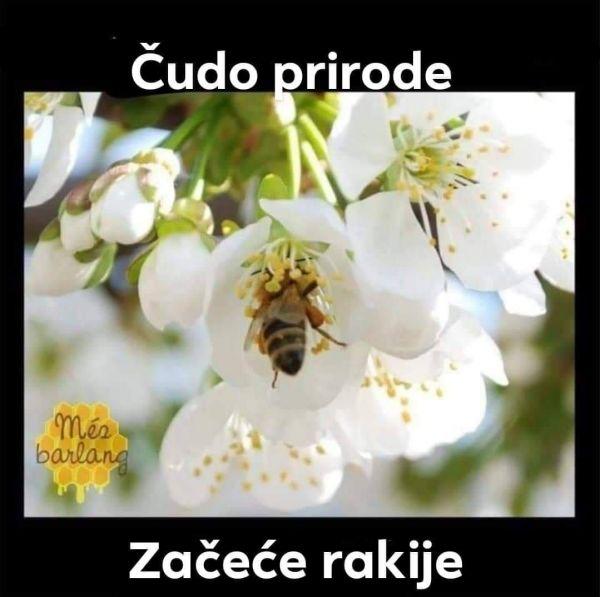 whatsapp-image-2021-01-16-at-11-07-4921D9DF98-B38A-4A83-3479-7E2D3CC373A5.jpeg